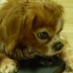 愛犬と共に暮らす家 第一章