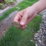 芝生のお手入れ実践(芝刈り)。きれいな芝生を保つには?