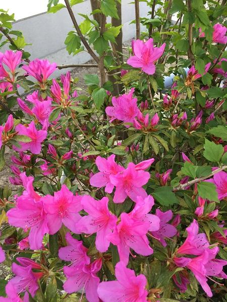 福岡の工務店の花