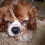 愛犬と共に暮らす家 第二章