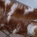 愛犬と共に暮らす家 第三章